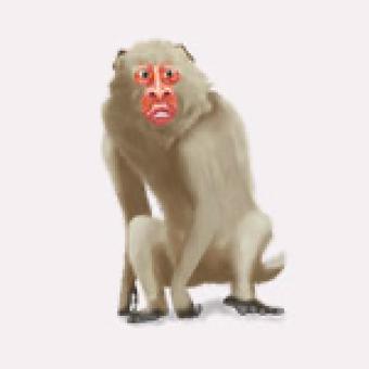 大猿のイメージ画像