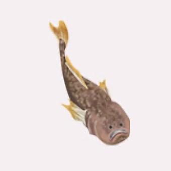 沼島女郎(ぬしまじょろう)のイメージ画像
