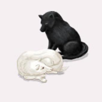 枚夫長者のいつもかわいがっている白と黒の愛犬二頭のイメージ画像