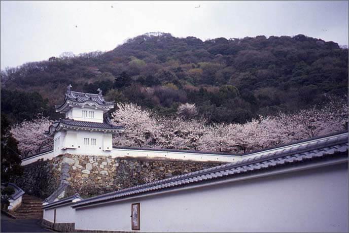 背後の城山(鶏籠山)が見える麓城の隅櫓の画像