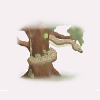 蛇のイメージ画像