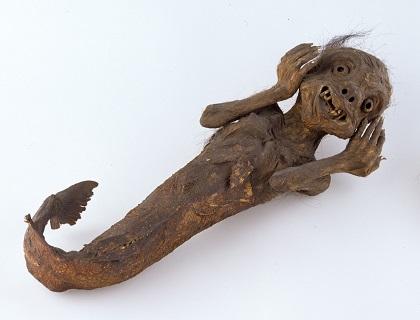 人魚のミイラの画像