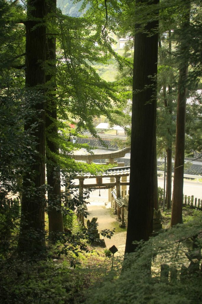 木立の中を上る階段