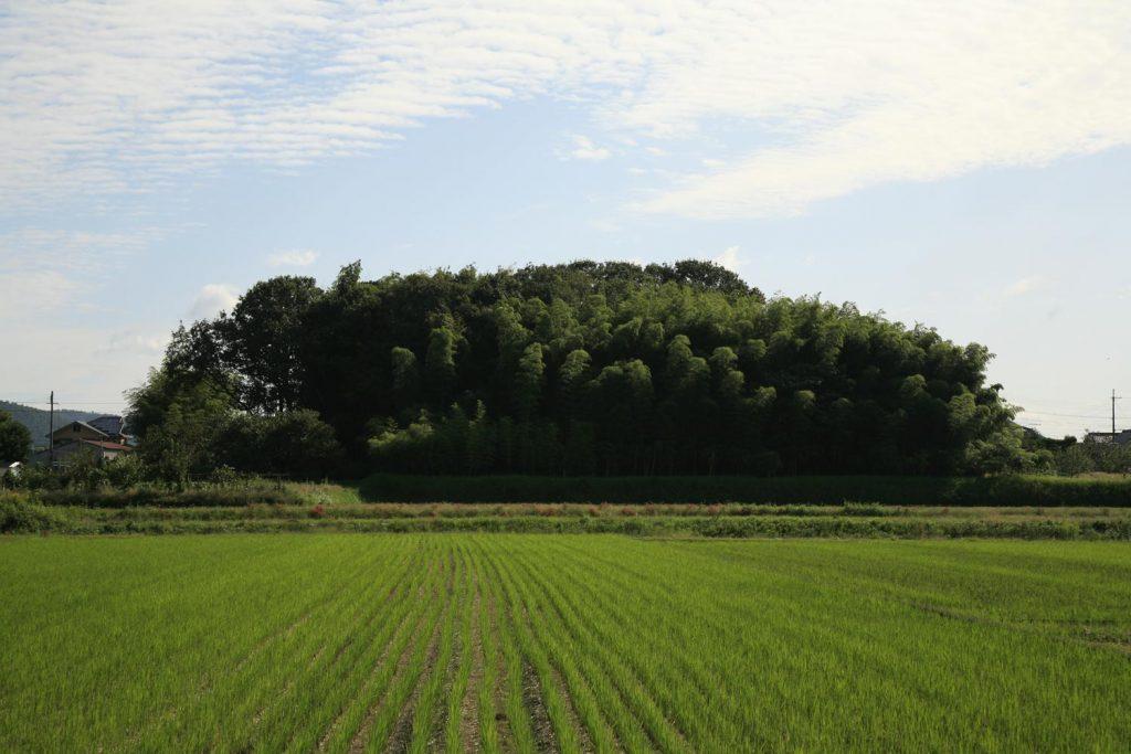 粳岡(近景)