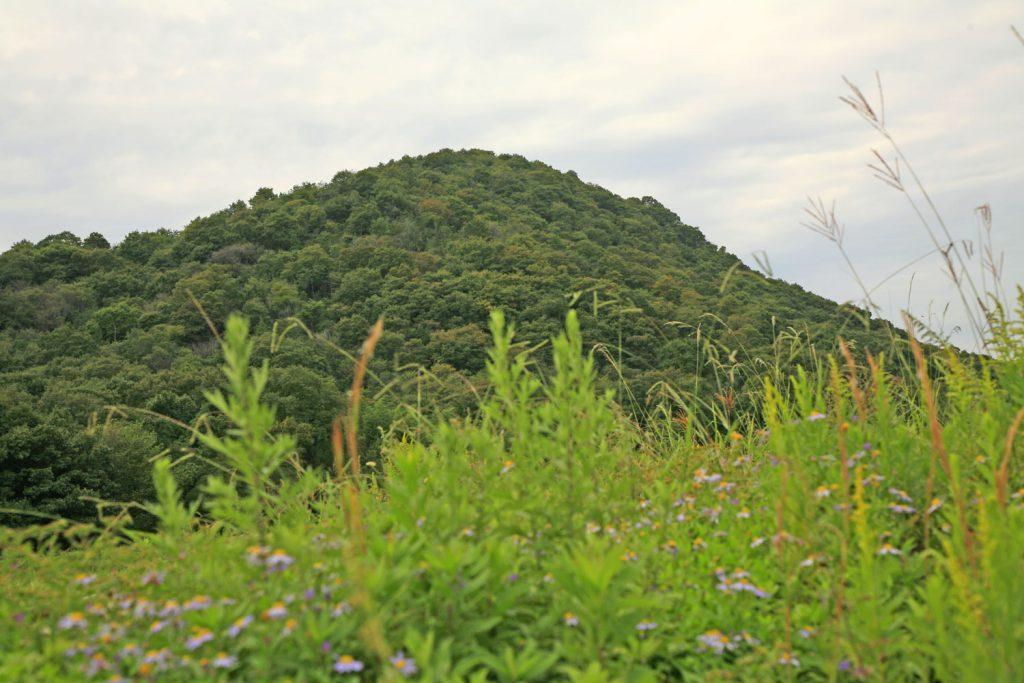 糠塚山(近景)