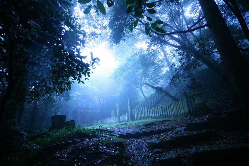 森の中に霧がかかる