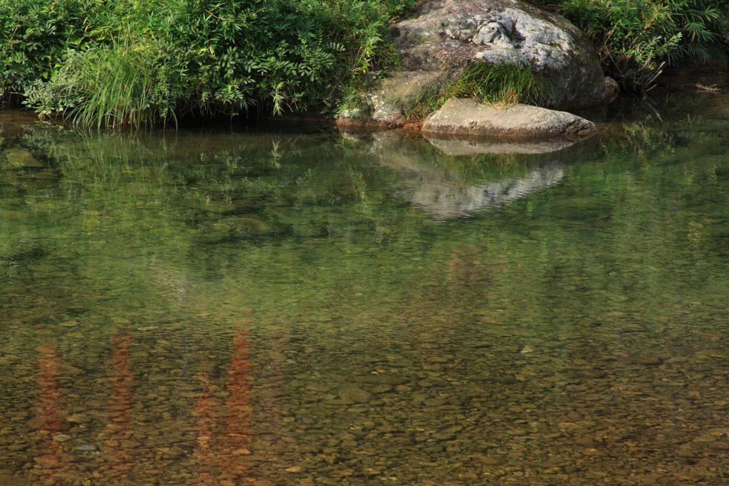 椀貸し淵の水面