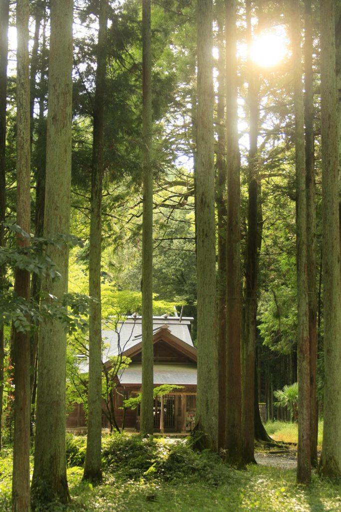 杉木立の中の社殿