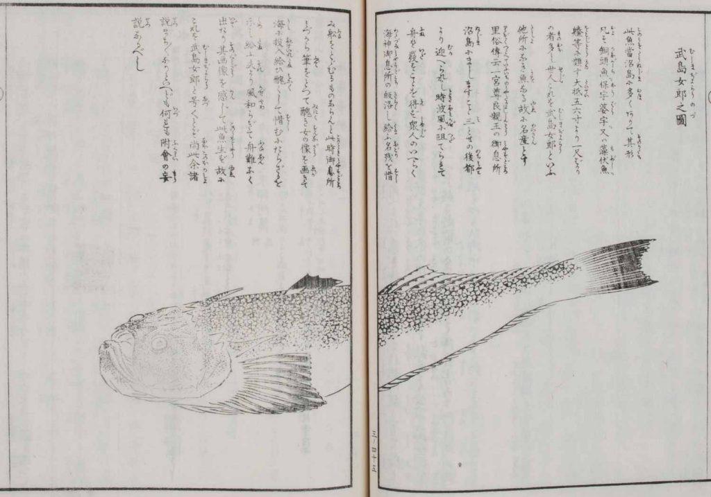 沼島女郎(『淡路国名所図絵』)