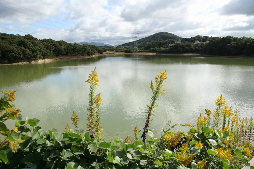 金棒池と雄岡山